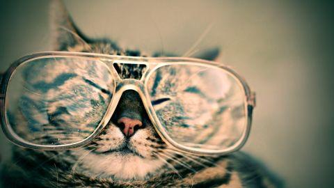 cat web pixabay